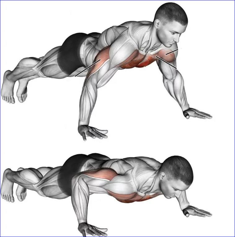 Мышцы при отжиманиях