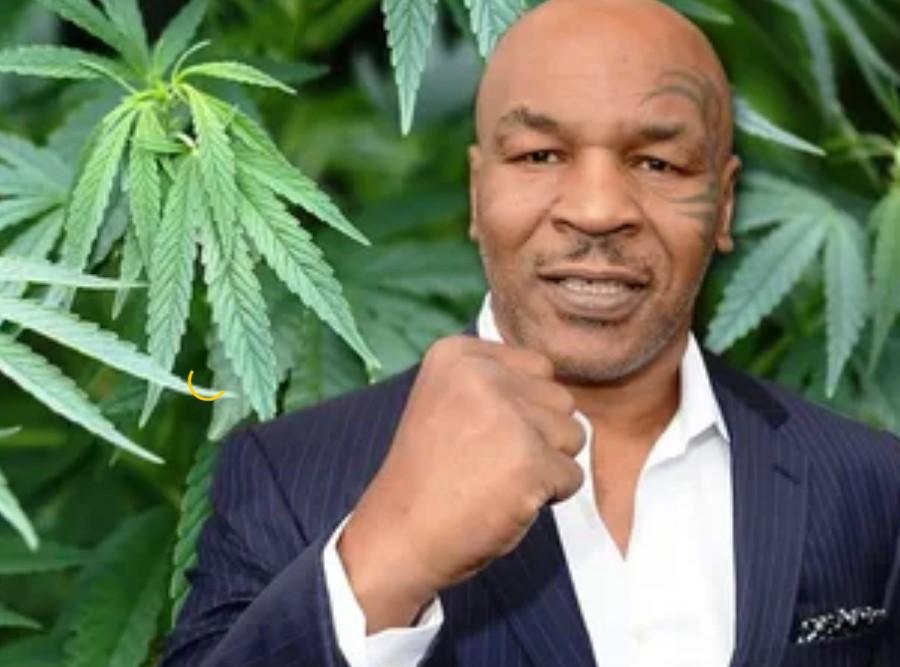 Из боксера в конопляного короля. Как Майк Тайсон зарабатывает $500 000 на выращивании конопли