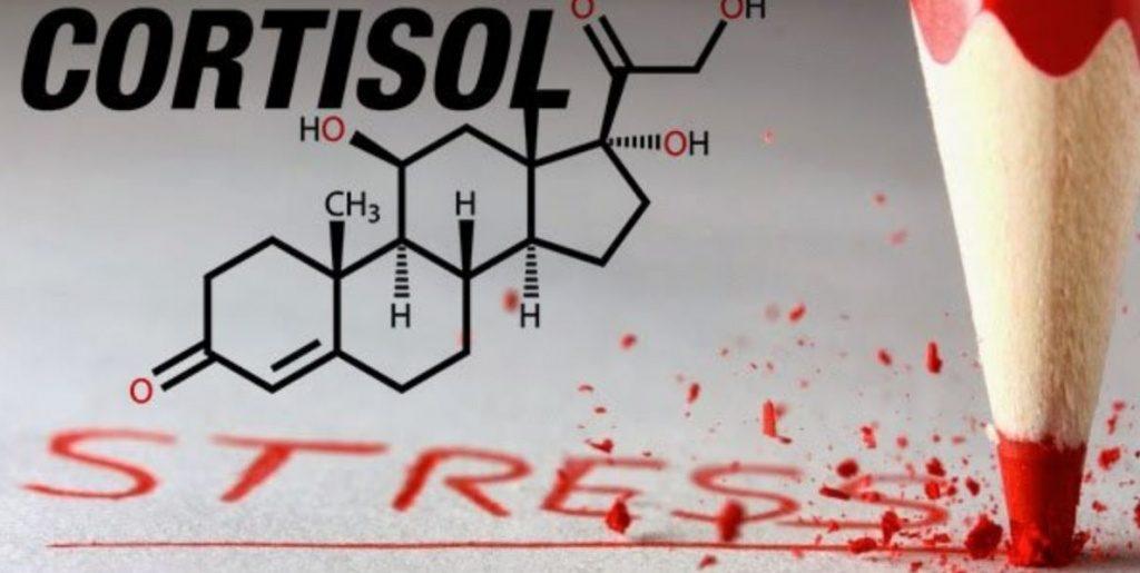 Кортизол еще довольно часто называют гормоном стресса